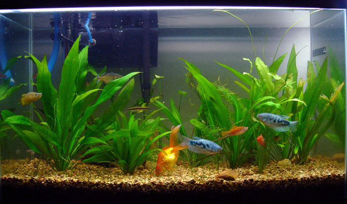 ... ll be switching this 29 gallon to a 55 gallon i ve been doing a